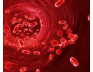 Чем срочно поднять гемоглобин в домашних условиях