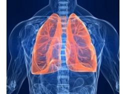 Бронхит: симптомы и лечение у взрослых, профилактика заболевания