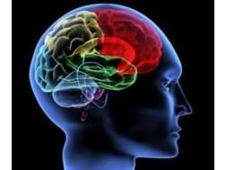 Что это такое шишковидная железа головного мозга, ее функции