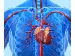 Сколько живут после операции на шунтирование сердца, отзывы о методе лечения
