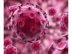 Чем опасен вирус ящура для человека, последствия болезни