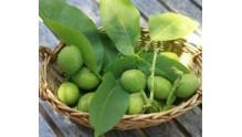 Помогут ли зеленые грецкие орехи от щитовидки, рецепт настойки
