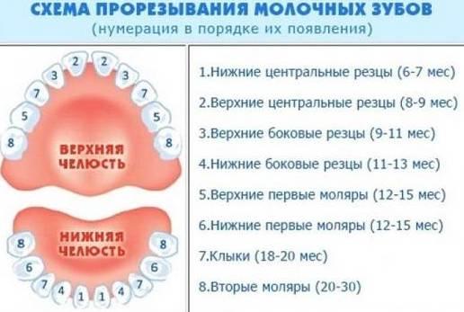 схема прорезывания