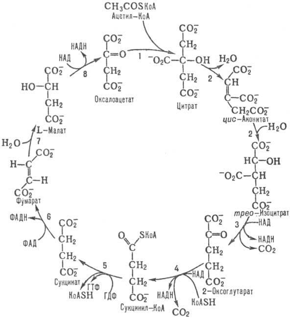 формула цикла