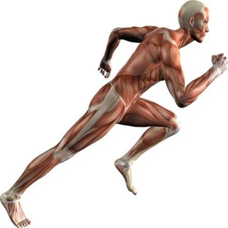 человек с мускулатурой