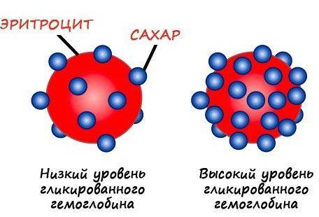 эритроцит сахар