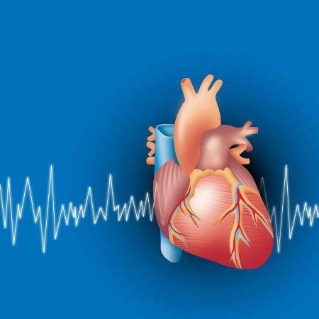 частота сердечного ритма
