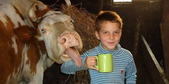 вирус ящура в молоке