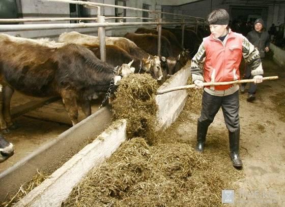 кормление скота