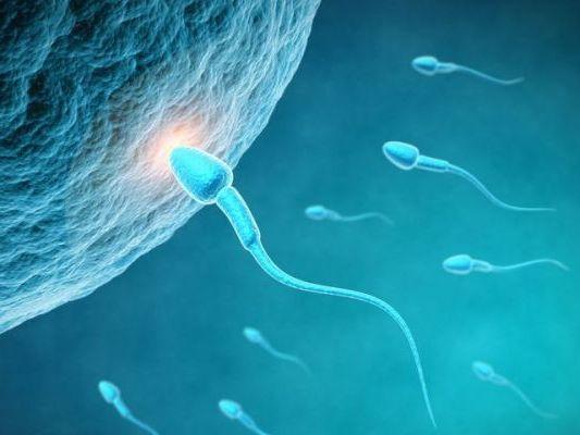 спермотазоиды рвутся вперед
