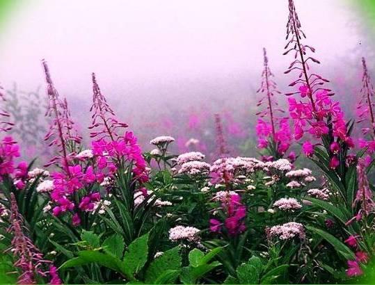 растет с другими растениями в поле