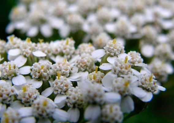 цветки вблизи