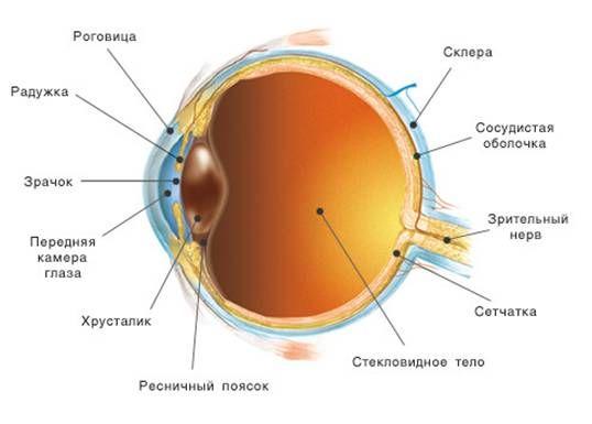 строение глазного блока