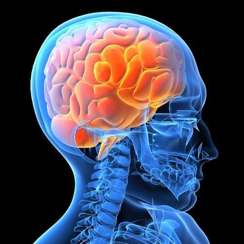 подсвечивается головной мозг