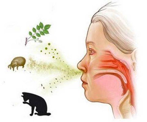 раздражение на пыль и животных