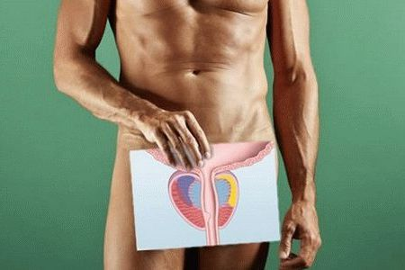 мужская простата