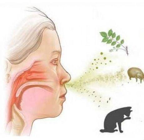 аллергия на пыль продукты и животных