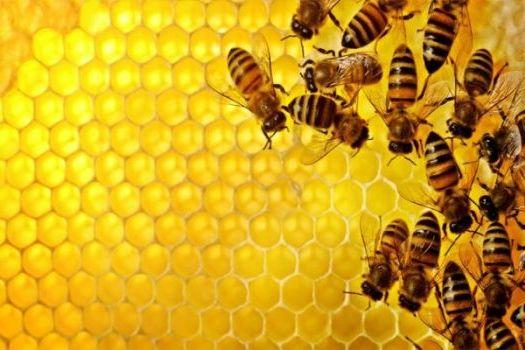 соты меда с пчелами
