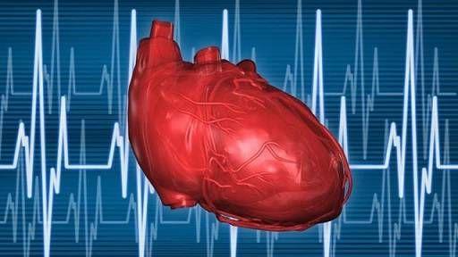 сердце с клапанами