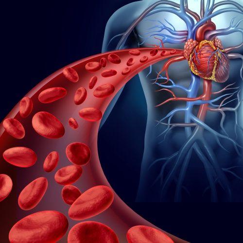 артерия к сердцу