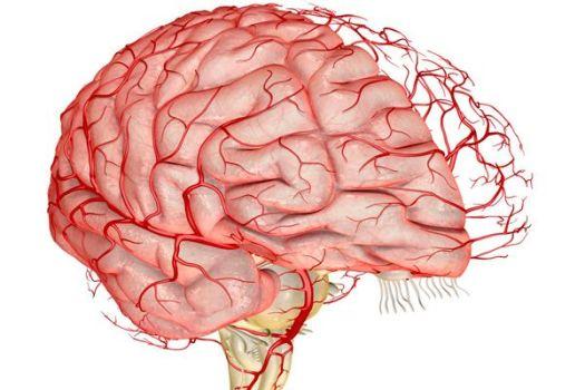 кровообращение мозга