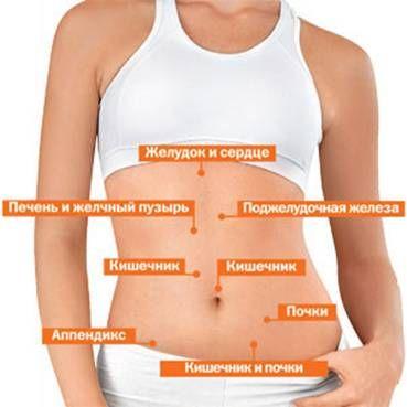 органы в области живота