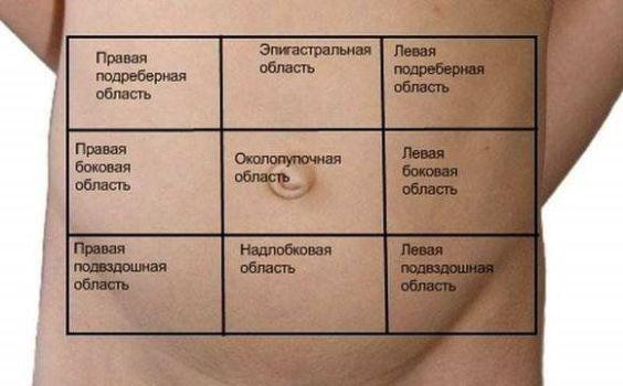 области на животе