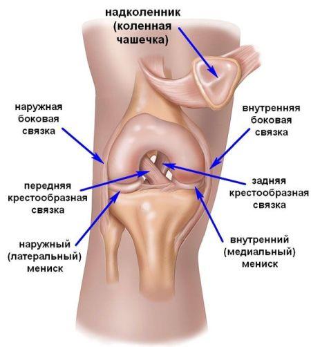 коленный сустав и мышцы