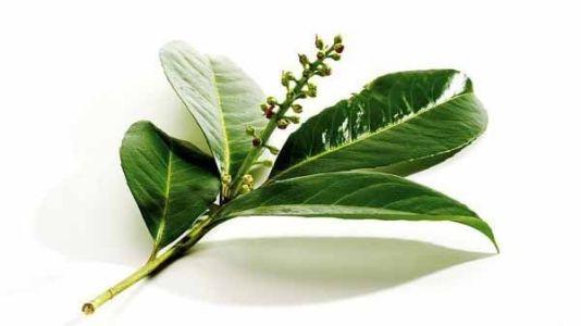 листья чеснока