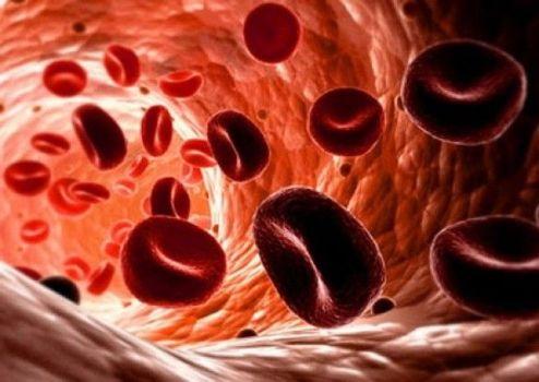 кровяные частицы
