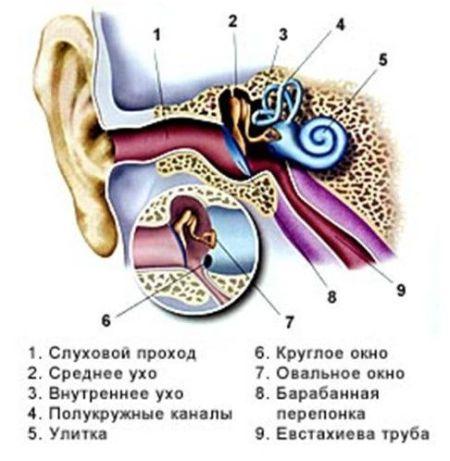 как устроен ушной проход