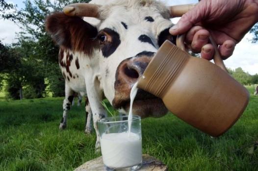 вирус рогатого скота