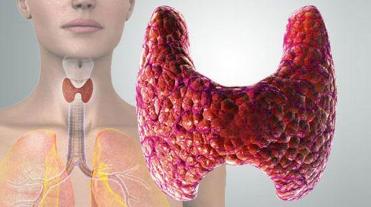 щитовидка где находится и как выглядит