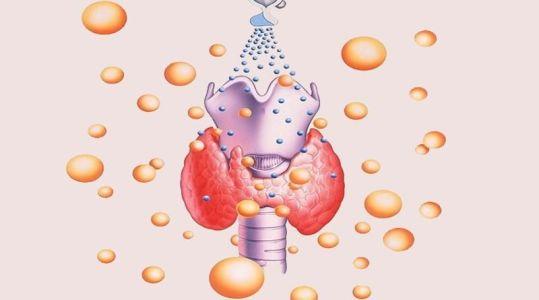 защитные функции щитовидки