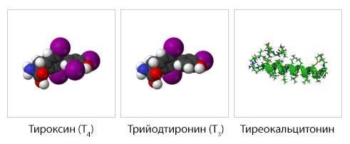 3 гормона щитовидки