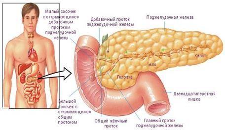 добавочный проток поджелудочной железы