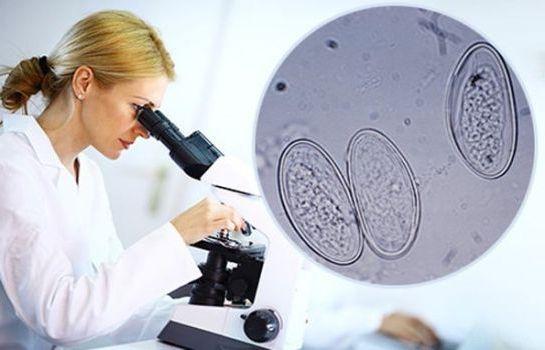 под микроскопом острицы