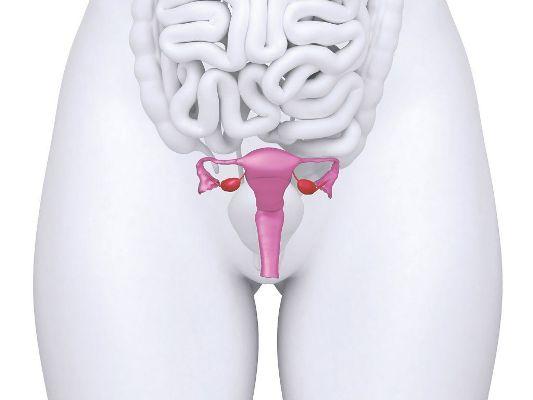 расположение матки под кишечником