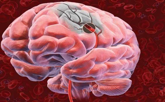 для работы головного мозга