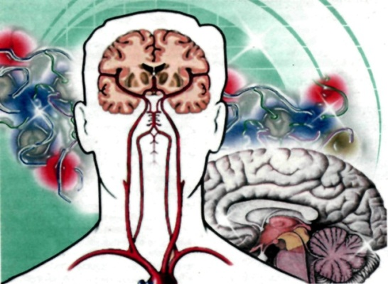 способствует работе мозга