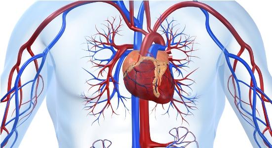 при сердечно-сосудистых болезнях